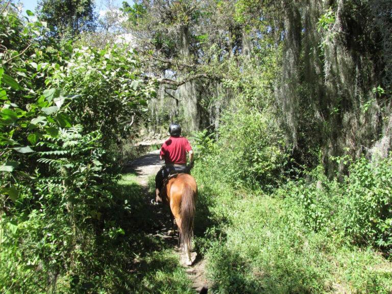 horseback_riding_tours_Ridingcolombia