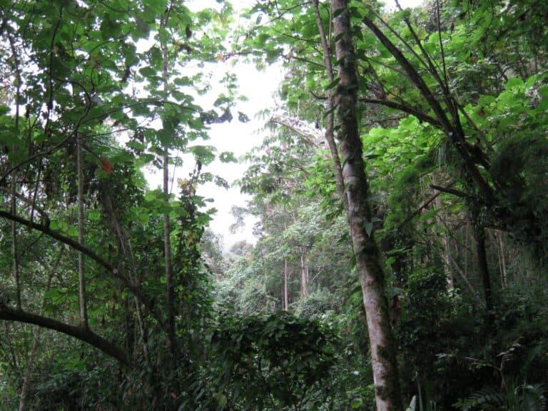 bosque-1-scaled
