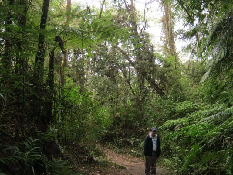 hiking_tours-Ridingcolombia