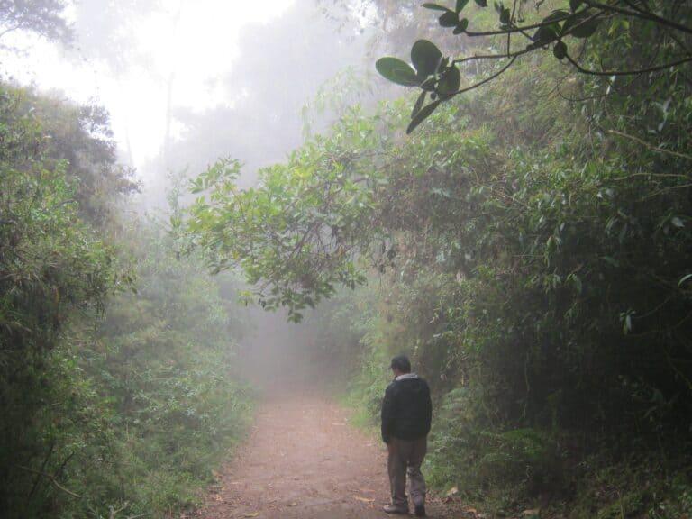 camino-niebla-1-scaled