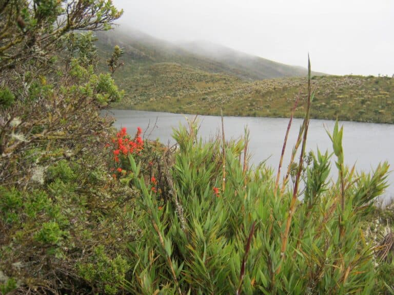 Paramo_colombian_hikes_Ridingcolombia